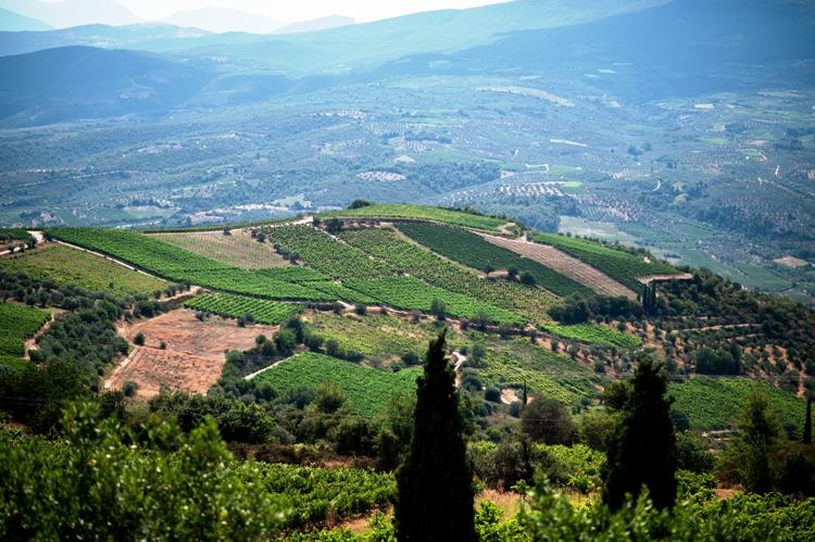 the_wine_connoisseurs_greek_summer_town_greek_wine_tour_greek_gastronomy_wine_tasting_greek_wineries