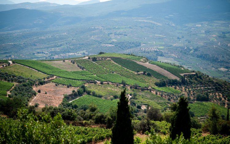 nemea_greek_wine_tours