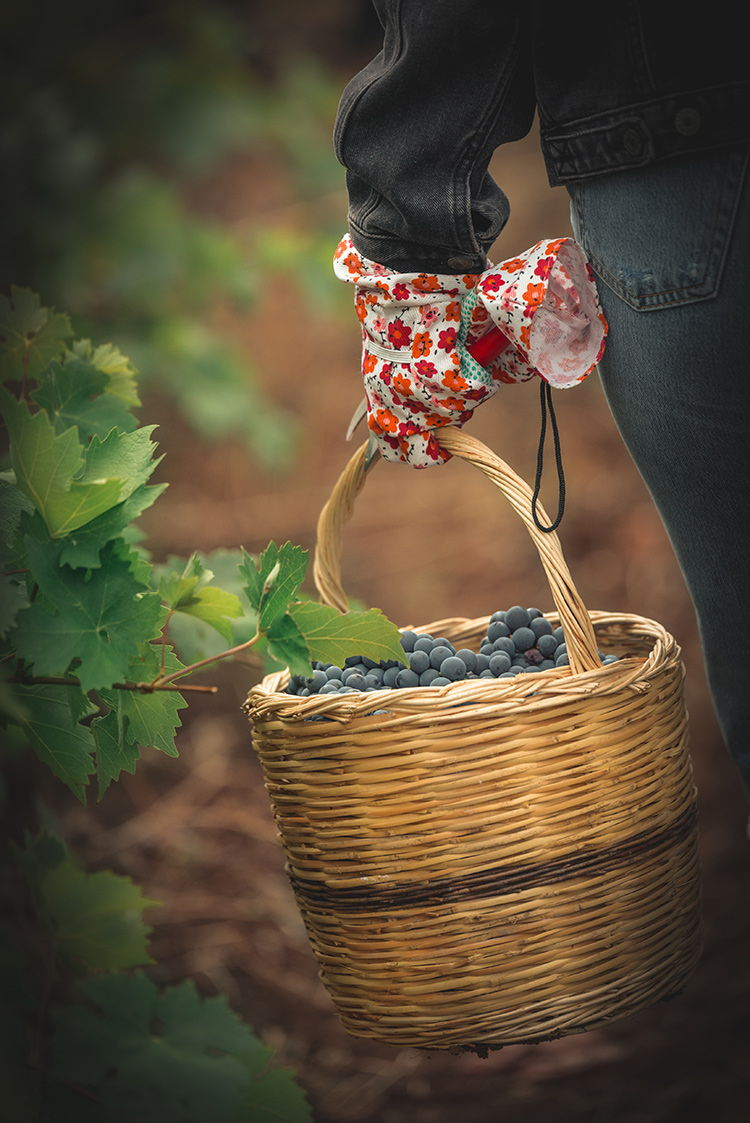 Greek private tailormade food and wine tours ,harvest wine tour, luxury family wine tour, awarded Greek wineries