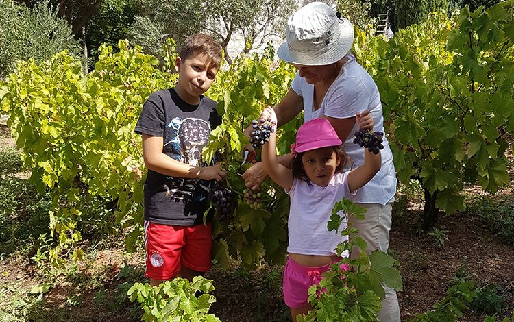 Greek private tailormade food and wine tours ,luxury family wine tour, wine tasting, certified sommelier wine tour, harvest wine tour