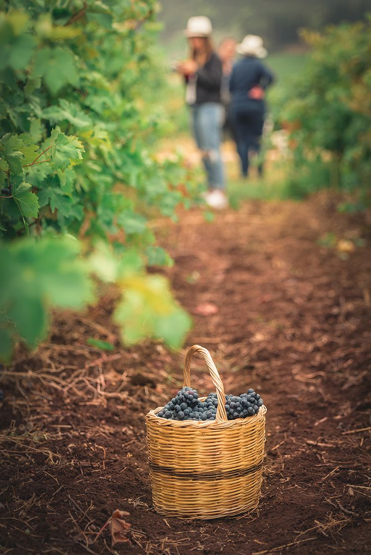 Greek private tailormade food and wine tours ,harvest wine tour, luxury family wine tour, awarded wineries