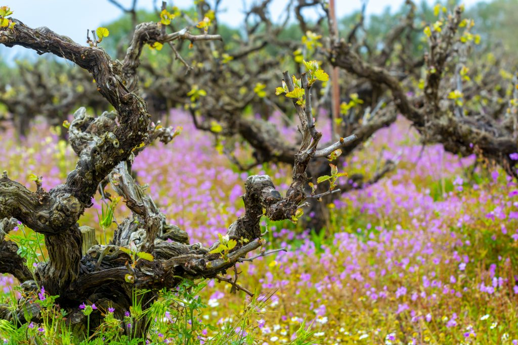 ATHENS WINE TOURS, GREECE | MARCH – APRIL 2020