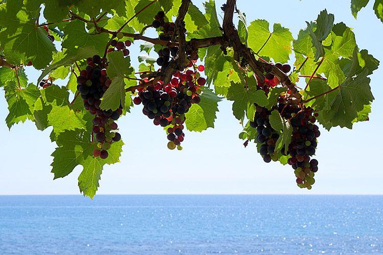 Athens wine tours, Athens wine tasting, Cape Sounion Temple of Poseidon tour