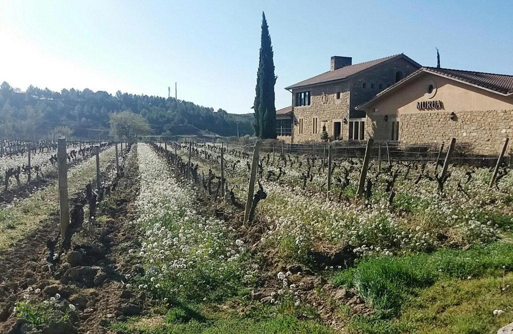 A JOURNEY TO THE INTOXICATING WORLD OF RIOJA ALAVESA