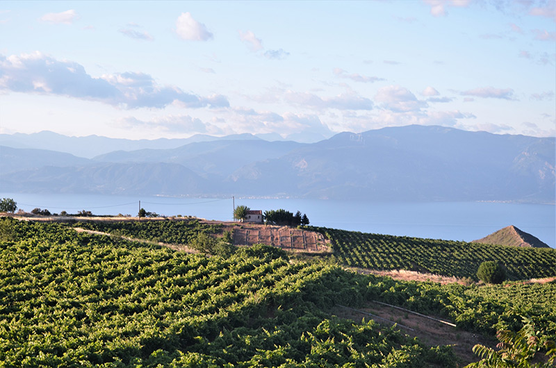 greece-wineries-rouvalis-1