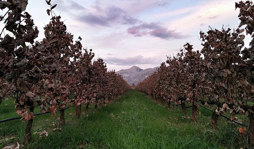greece-wineries-troupis-1
