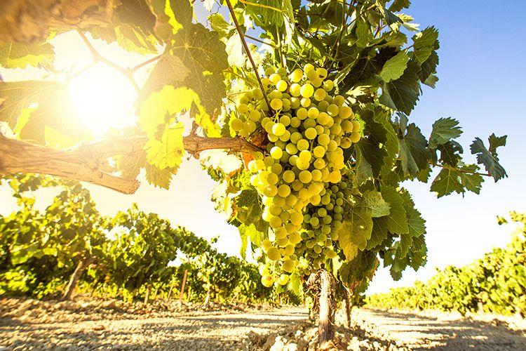 Greece luxury tailormade food wine culture tours