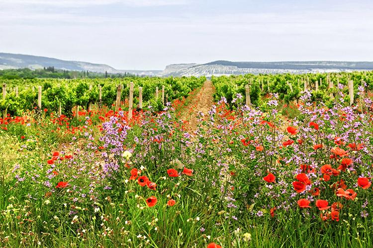 Athens wine tour,Private food wine tour Athens Greece, Cape Sounio tour, visit Greece, Nemea wine tour