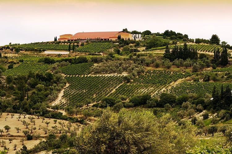 greek-wineries-nemea-1