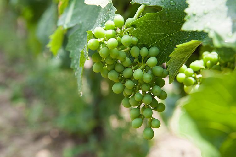 greek-wineries-nemea-2