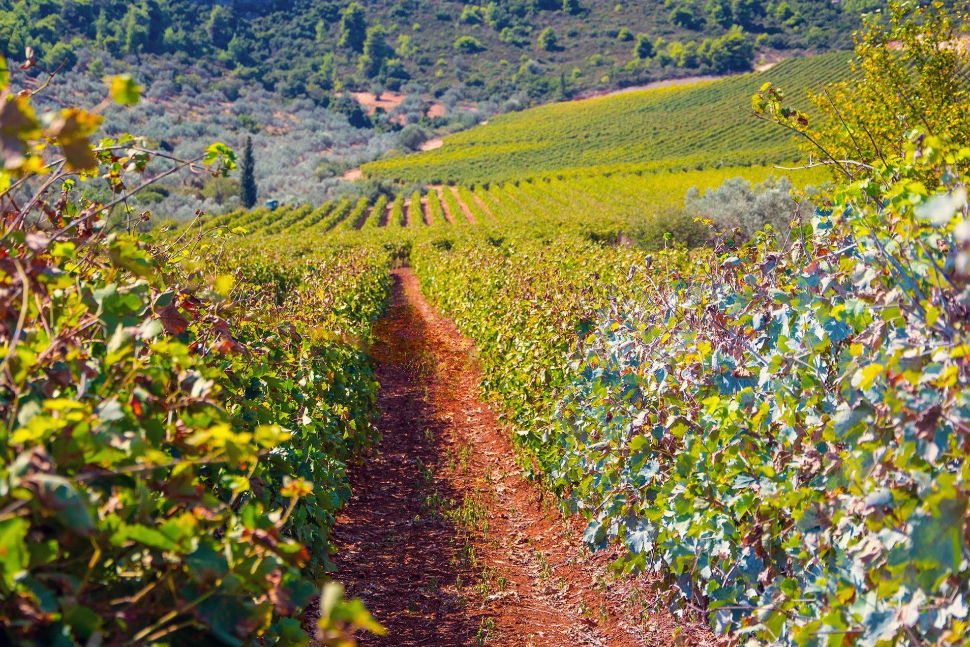 LUXURY WINE FOOD TOUR IN GREECE, VISIT NAFPLIO